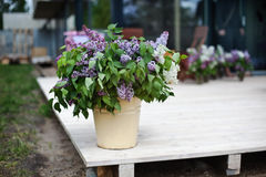 Lilac decoration stock photos