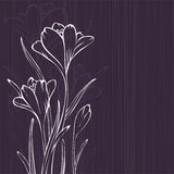 Lilac design with crocus Stock Photo