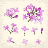 Lilac details set Royalty Free Stock Photography