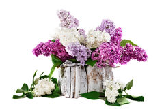 Lilac different colors with leaves is in a white wooden basket. Stock Photography