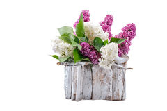Lilac different colors with leaves is in a white wooden basket. Royalty Free Stock Photos