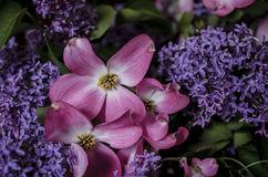 Lilac and Dogwood Royalty Free Stock Image
