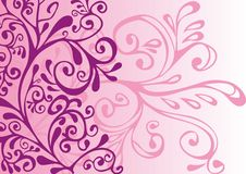 Lilac e fundo cor-de-rosa Foto de Stock Royalty Free