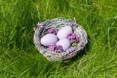Lilac eieren in een nest op groene grasachtergrond Stock Afbeeldingen