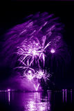 Lilac  firework in a night sky Stock Image