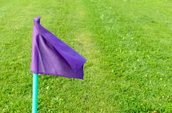 Lilac flags on the green grass of a football playing field. Stock Photo