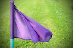 Lilac flags on the green grass of a football playing field. Royalty Free Stock Photo