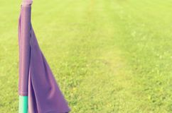 Lilac flags on the green grass of a football playing field. Royalty Free Stock Images