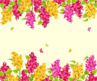 Lilac. Floral background. Royalty Free Stock Image