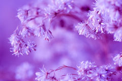 Lilac floral background Stock Images