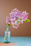 Lilac flower Stock Photos