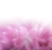 Lilac flower background. LENSBABY soft focus len Royalty Free Stock Photo