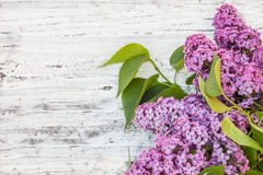 Lilac flower Royalty Free Stock Photography