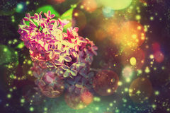 Lilac Flower with Bokeh Royalty Free Stock Image