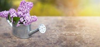 Lilac flower bouquet Stock Photos