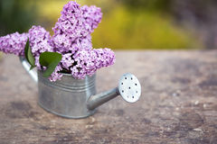 Lilac flower bouquet Royalty Free Stock Photography