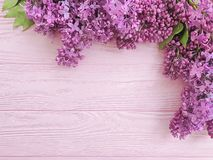 lilac flower bouquet on pink wooden background frame stock images