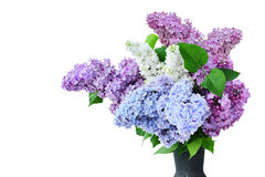 Lilac flower bouquet several colors in vase  - Syringa vulgaris Stock Image