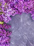 Lilac flower on concrete background frame seasonal stock images