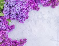 Lilac flower on concrete background frame seasonal royalty free stock photo