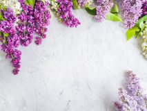 lilac flower summer decoration on concrete frame background design bouquet royalty free stock photography