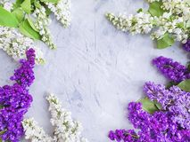 lilac flower summer on concrete frame background design bouquet royalty free stock photo