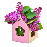 Lilac flower in decoration box isolated Royalty Free Stock Image