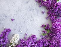 Lilac flower gray concrete background frame. Lilac flower on gray concrete background frame royalty free stock photography