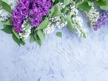 Lilac flower on gray concrete background frame. Lilac flower gray concrete background frame stock images