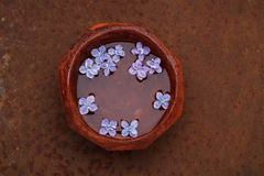 Lilac flower petals floating in a bowl of water Stock Photos