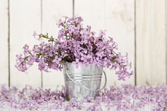 Lilac flower royalty free stock photo