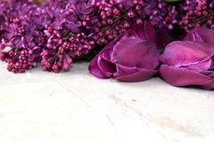 Lilac flower and tulips Royalty Free Stock Photography
