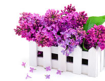 Lilac flower twig in decoration box Stock Photography