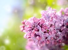 Lilac flower under the blue sky, against beautiful bokeh and sparkling lights. Stock Photos