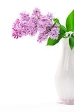 Lilac flower in vase Royalty Free Stock Photo