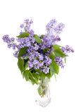 Lilac flower in vase. Isolated on white background Stock Image