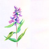Lilac flower. Watercolor floral illustration. Stock Photo