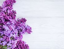 Lilac flower springtime  seasonal  white wooden background frame celebration. Lilac flower on white wooden background frame celebration springtime seasonal royalty free stock photo