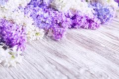 Lilac Flower Wood Background, Blooms Pink Color Flowers stock images