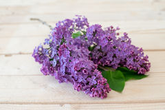 Lilac flower on a wooden background Stock Image