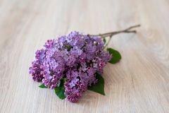 Lilac flower on a wooden background Royalty Free Stock Photo