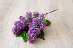 Lilac flower on a wooden background Royalty Free Stock Photography
