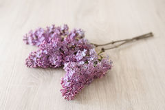 Lilac flower on a wooden background Stock Images