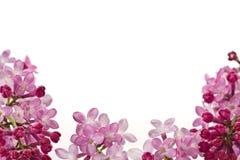 Free Lilac Flowers Stock Photos - 24744093