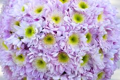 Lilac flowers. Beautiful background from lilac flowers Royalty Free Stock Image