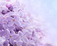 Lilac flowers. Abstract background. Stock Images