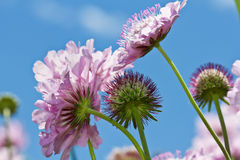 Lilac flowers against blue sky Stock Image
