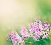 Lilac flowers background Stock Photography