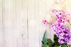 Lilac flowers background Royalty Free Stock Images