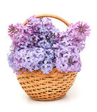 Lilac flowers in basket Stock Photos